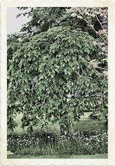 worth a post-stamp? (camerito) Tags: flowers tree flickr border blumen baum rahmen j4 briefmarke poststamp nikon1 camerito