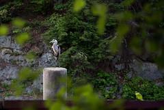 Mine Falls Park, Nashua, NH (johnkulhawik203) Tags: outside newhampshire nh nashua kulhawik minefallspark
