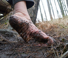 December mud (Barefoot Adventurer) Tags: winter nature forest woodland walking freedom pineneedles barefoot barefeet connected barefooted barfuss muddyfeet barefooting barefoothiking barefooter baresoles muddysoles coldsoles