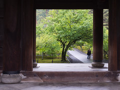 Romance in Kyoto (k n u l p) Tags: love rain temple spring kyoto couple olympus  nanzenji freshgreen   zd  1260mm epl5