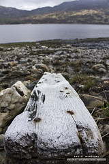Driftwood (DMeadows) Tags: wood lake water rock stone scotland wooden rust rocks stones nail hill rusty hills driftwood nails shore worn loch plank trossachs arklet davidmeadows dmeadows davidameadows dameadows
