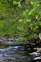 Down Stream (RebeccaCMorris_) Tags: trees green water river aberdeenshire stonehaven