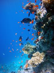 AMBA0015 (Aran Smithson) Tags: ocean sea fish coral marine underwater redsea egypt sharmelsheikh reef