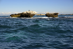 Rottnest collection 3