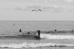 Bondi Beach 6: Seagull Guide. (Lors37) Tags: ocean sea wild portrait people white black laura bird beach water bondi canon flying surf waves seagull sydney july australia surfing surfers dodd lilliput 2013 60d doddwild