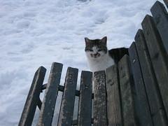 Neve a Roma - 2012 (RolandoBabuin) Tags: winter italy parco snow rome roma cat italia neve inverno freddo lazio gatta panchina musetta
