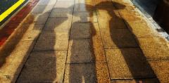 Friends ©talhaakkuphotography (Talha AKKU) Tags: road street friends shadow 3 signs wet rain yellow umbrella best idiots bestfriends talha akku talhaakku talhaakkuphotography