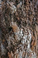Coromandel-Hahei Beach Drift Wood (scrumpy 10) Tags: newzealand beach nature landscape nikon natur driftwood aotearoa mothernature coromandel neuseeland landschaften d800 hahei jacqualine ozeanien newzealandnature scrumpy10