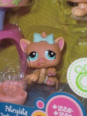 Petshop 1335 (MissLilieDolly) Tags: bear horse dog chien pet pets bird cat cheval chat panda tiger collection figurines dolly figurine miss animaux petshop tigre oiseau lilie hasbro ours 1335 missliliedolly