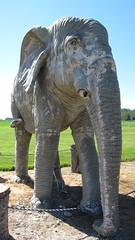 Freeland Elephant at Dugualla Bay Farms (mailgirl333) Tags: seattle elephant june statue island bay harbor washington oak wa farms whidbey freeland 2013 dugualla