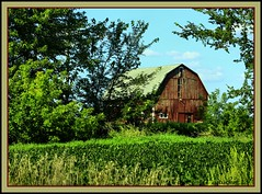 Barn, Crop, Trees (the Gallopping Geezer '5.0' million + views....) Tags: abandoned barn rural canon decay michigan farm country central farmland faded worn decayed geezer 2013 tonemap
