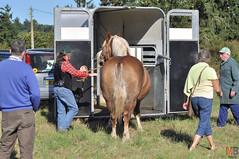 DSC_0078 (- MB Photo -) Tags: de cheval des 09 labour concours 07 vache tracteur vaches chevaux bourg comice agricole comptes 2013 bourgdescomptes  labourer