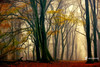In Love with Fall (larsvandegoor.com) Tags: wood autumn trees red holland green fall nature colors leaves yellow forest landscape branches seasonal foliage larsvandegoor speulder
