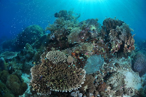 late afternoon light reef top pantar island