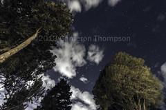 Midnight in the park (SW23CT (CamsDigitalCanvas.com)) Tags: blue trees sky black green up night clouds dark stars pov space nighttime moonlight tall nikond7100