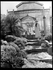 Botanic Gardens, Adelaide (State Records SA) Tags: blackandwhite photography australia historical southaustralia frankhurley srsa staterecords staterecordsofsouthaustralia staterecordsofsa