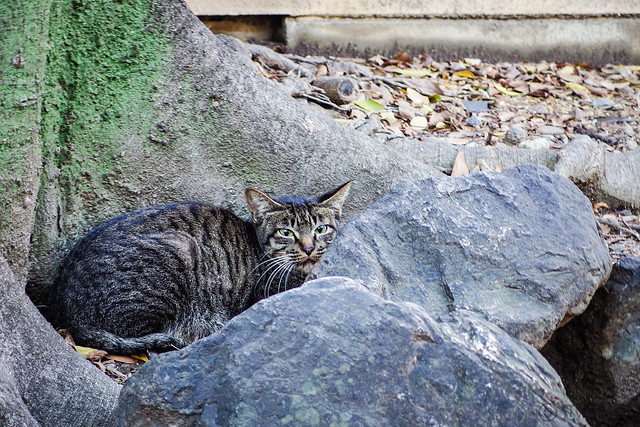 Today's Cat@2013-11-06