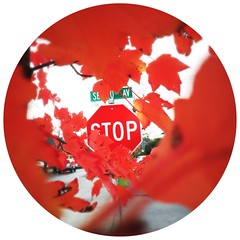 "#stop #sign #autumn #red • <a style=""font-size:0.8em;"" href=""https://www.flickr.com/photos/61640076@N04/10743687674/"" target=""_blank"">View on Flickr</a>"