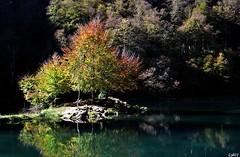 Lac de Bethmale, Ariège, Midi-Pyrénées (lyli12) Tags: france nature automne nikon lac reflet paysage couleur ariège midipyrénées d7000
