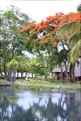 IMG_2450 (federica.piersimoni) Tags: blogger mauritius blogtour maublogtour