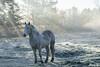 Frozen Horse (MaximeG.Pix) Tags: light horse white cold fog cheval 50mm frozen nikon freeze rays blanc potofgold d3200 nikonflickraward nikonflickrawardgold vpu3 vpu4 vpu6 vpu7