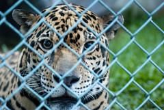La mirada de un prisionero inocente