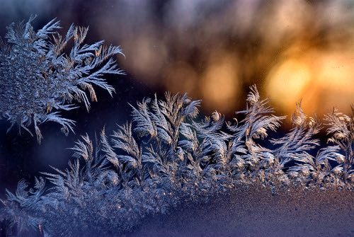 Window Fern Frost