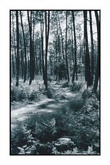 IMG_GF_1 (paliena33) Tags: blackandwhite france forest forêt landes sudouest artinblackandwhite