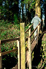 Squeezing through the Squeeze Bridge (Keith in Exeter) Tags: uk bridge england woodland landscape countryside ditch devon rails fencing unusual title posts passage footpath narrow distinctive squeezing crossingover sqeezing
