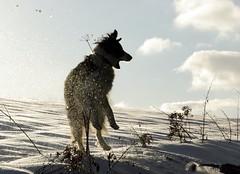 Winter-2012 (fretz.jeannot) Tags: bewegung mischi winter2010 {vision}:{sky}=083 {vision}:{mountain}=0514 {vision}:{outdoor}=0975