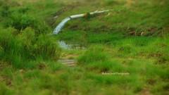 IMG_8423 (Mohsin Javid Photography) Tags: africa flowers blue pakistan summer india plant paris colour bird london birds animals oslo clouds photography europe fullmoon land wallpapers punjab lahore indus photoes islamabad bwp bahawalpur rahimyarkhan iphotography