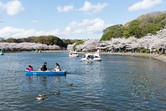 (GenJapan1986) Tags: japan spring   cherryblossoms hyogo 2014   nikond600