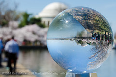 Crystal Ball Cherry Blossoms-52 (KLMP) Tags: usa monument festival ball cherry dc washington memorial crystal blossom tourists basin national jefferson karin tidal markert