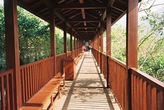 bridge (planetails ) Tags: china wood bridge trees light sunlight film nature lines forest 35mm warm perspective explore pointandshoot figures hainan filmgrain diagonals olympusmju1