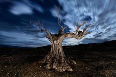 En el Olvido (raul_lg) Tags: longexposure espaa tree night canon arbol noche spain cielo nubes estrellas nocturna olivo largaexposicion almeris raullopez canon5dmarkiii raullg