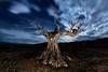 En el Olvido (raul_lg) Tags: longexposure españa tree night canon arbol noche spain cielo nubes estrellas nocturna olivo largaexposicion almeris raullopez canon5dmarkiii raullg