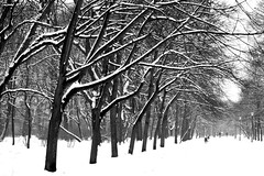 Overwhelming brightness (Paulina_77) Tags: park trees winter light shadow blackandwhite bw white snow black cold tree ice nature lamp monochrome weather contrast bench landscape mono daylight frozen high cool alley nikon scenery frost mood branch gloomy post bright outdoor snowy path walk branches poland polska frosty snowcapped covered chilly snowing iced grayscale icy melancholy nikkor benches snowfall wonderland footpath stroll chill brightness coolness wistful alleys lodz łódź whiteness coldness wintry d90 boulevar 55300 nikond90 atmnosphere 55300mm 55300mmf4556 nikkor55300mm pola77