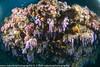 2014 Maldives - GoPro 17549.jpg