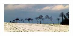 Winterlandschaft (blasjaz) Tags: schnee winter germany strasse bume hesse homberg vogelsberg vogelsbergkreis hombergohm blasjaz appenrod appenrodhomberg
