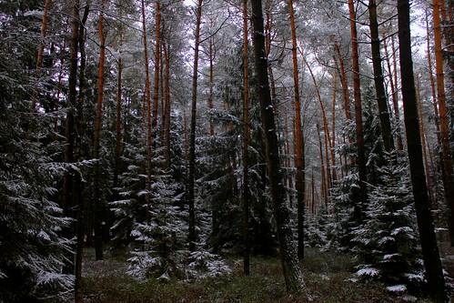 "Im Winterwald (mit Schnee) 2015 • <a style=""font-size:0.8em;"" href=""http://www.flickr.com/photos/69570948@N04/16250664059/"" target=""_blank"">View on Flickr</a>"