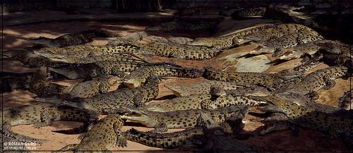 На крокодиловой ферме | Thailand