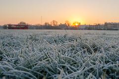 Frosty Blackheath (Spannarama) Tags: uk bus london grass sunrise frost blackheath frosty heath
