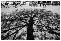 Nieuwmarkt Amsterdam (jmvanelk) Tags: shadow tree amsterdam projection nieuwmarkt sigma2814mm nikond300s