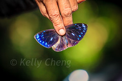 Taiwan-121113-268 (Kelly Cheng) Tags: travel color colour green tourism nature animals horizontal fauna butterfly daylight colorful asia day taiwan vivid colourful traveldestinations  northeastasia