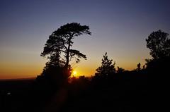 Wooded outline (Sundornvic) Tags: trees light sunset sky sun silhouette woods shine shropshire hill haughmond