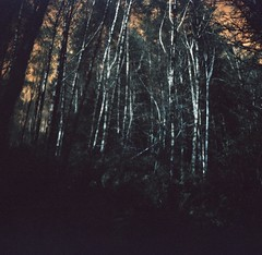 (liquidnight) Tags: trees oregon analog forest mediumformat lomo lomography woods solitude hiking turquoise toycamera surreal diana dreamy analogue dianaf vignetting pnw treescape dreamscape clatskanie filmphotography lomochrome lomochrometurquoise lomochrometurquoisexr100400 gnatcreektrail