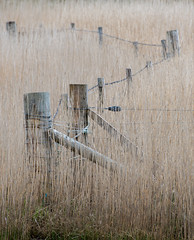 Fence and reeds (Donard850) Tags: reeds harris scotland posts wire fence