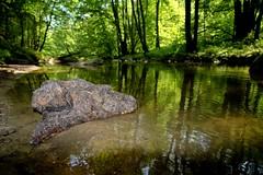 Schwemmholz (Andreas669) Tags: creek sommer bach fujifilm 12mm walimex obersterreich aist mhlviertel schwemmholz samyang rokinon xt10 feldaist samyang12mm20