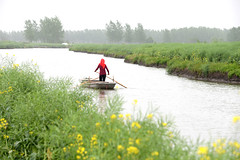 Boat (MelindaChan ^..^) Tags: life china people plant green field boat spring fisherman mel farmer melinda agriculture jiangsu rapeseed xinghua   melindachan channmelmel