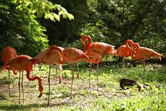 Mainz, Stadtpark, Flamingos (HEN-Magonza) Tags: germany deutschland flamingo mainz stadtpark municipalpark rheinlandpfalz phoenicopteridae rhinelandpalatinate